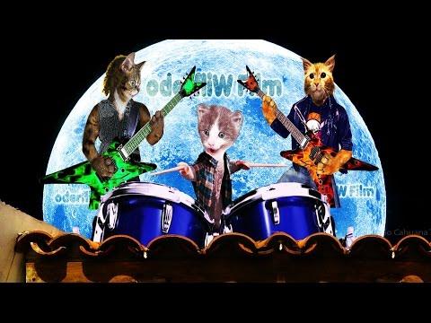 CONCIERTO EN EL TEJADO ¡Con los gatos Músicos más fabulosos del momento! ¡LOS MINSIS! HD