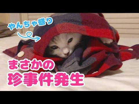 【珍事件発生】やんちゃ盛りの子猫の日常