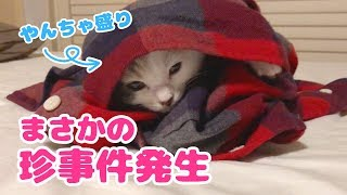 【珍事件発生】やんちゃ盛りの子猫の日常 thumbnail