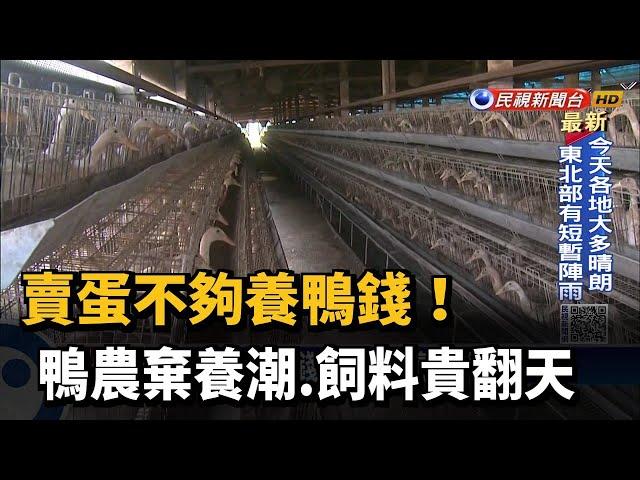 賣蛋不夠養鴨錢! 鴨農棄養潮.飼料貴翻天-民視台語新聞