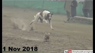 Gambar cover greyhound track race trials held at Rajpur coursing club Part 2 | 1-November
