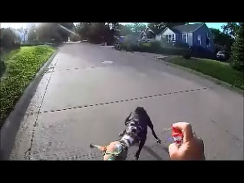 Dog Attacks Poor Little Comet! June 9, 2016
