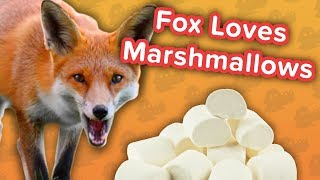 Marshmallow-Loving Foxes & Klepto Puppies! // Funny Animal Compilation