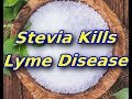 Stevia Extract Can Treat Lyme Disease, Better Than Standard Antibiotics