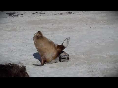 Kangaroo Island Sealink Day Trip