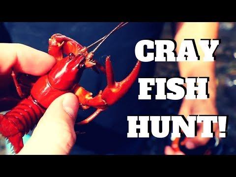 WILD Orange Crayfish Found Under Bridge!