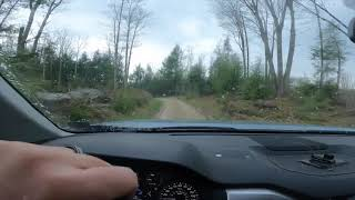 Spring Grouse Dog Training   4k