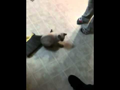 Animal Crushing Videos