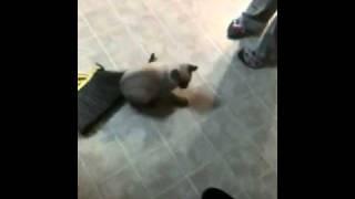 Animal cruelty XD