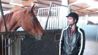 Nisar Stud Farm, Amer Nisar Khan, Jumping Horses Photos, Horse Dancing in Pakistan