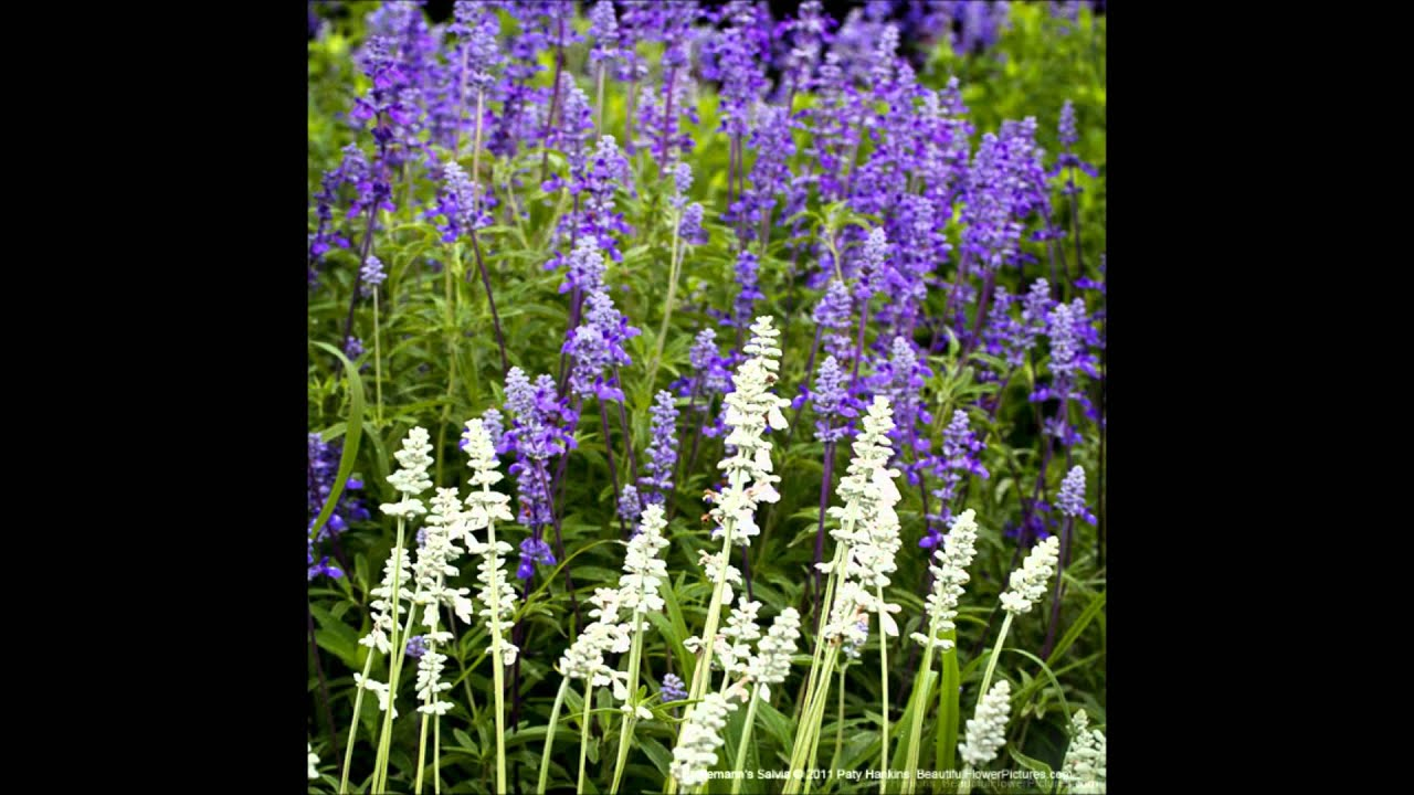 Beautiful Flower Pictures Spring Wildflowers Youtube