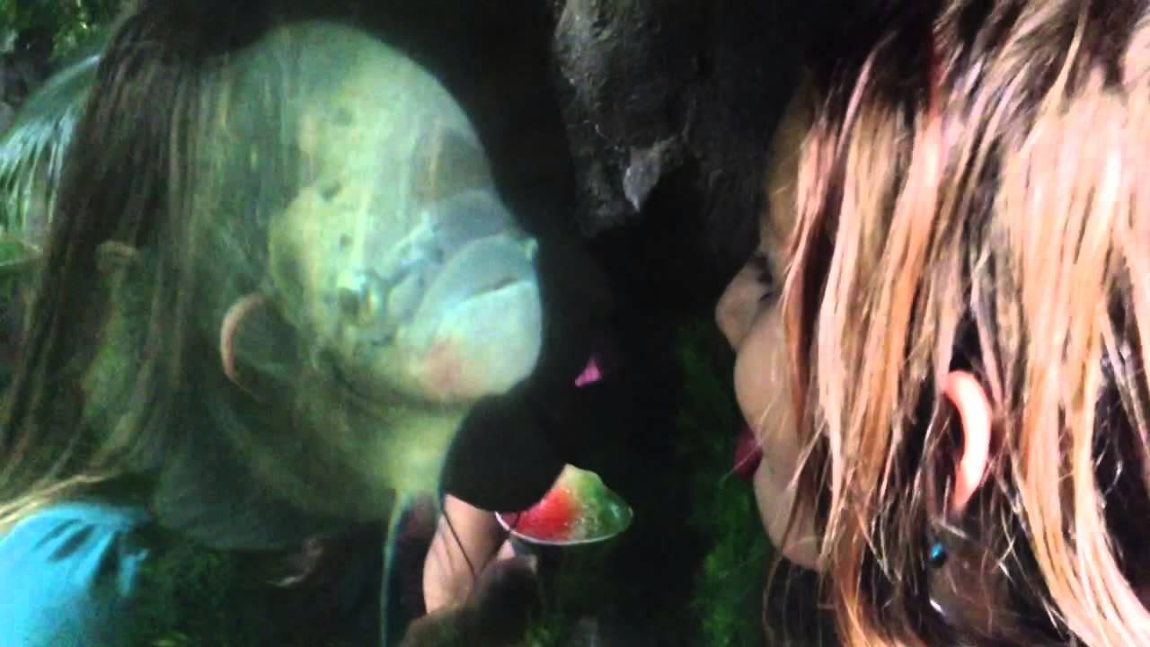 natalya fish