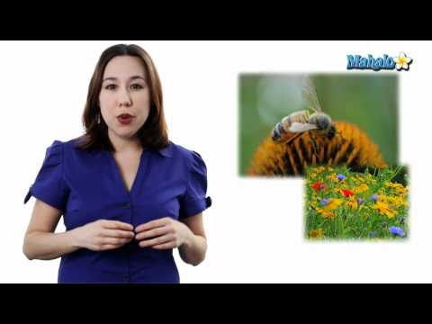 Learn Biology: Community Ecology- Interspecific Interactions