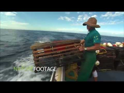 Ocean Industry Video - NatureFootage Stock Collection