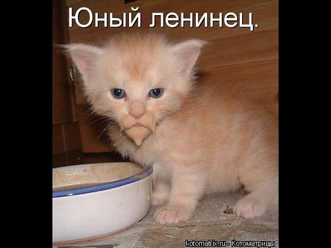 Смешные картинки про кошек и котят Выпуск №77  FUNNY CATS СМЕШНЫЕ КОШКИ