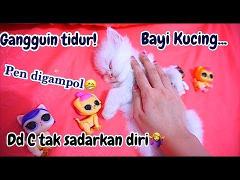 CATS SLEEPING - GANGGUIN BAYI KUCING TIDUR LUCU BANGET 😁 DEDE C KEBO LAGI MIMPI [ VIDEO LUCU ]