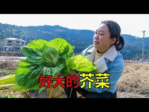 菜園裡的芥菜,媳婦說長得像花一樣,就是有點微苦 | Mustard grows like a flower, so big
