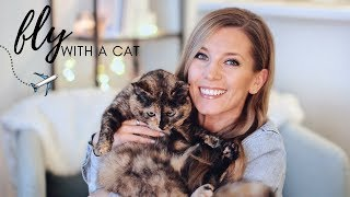 Pet Travel Routine: Flying with a Cat In-Cabin | What to Expect