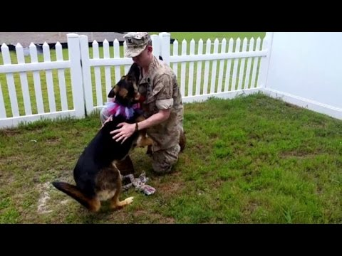 German Shepherd Welcomes Military Dad After Seven-Month Deployment