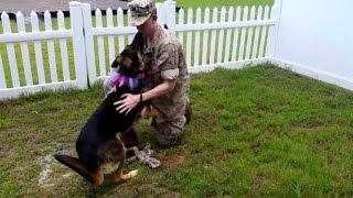 犬と兵士、感動の再会が再び。派兵されていた海軍兵が7か月後、ジャーマンシェパード犬と再会を果たした時