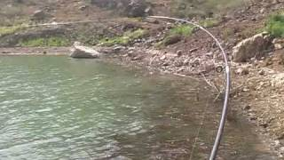 Carp-fishing in The Canary Islands; Pesca de la Carpa en Canarias