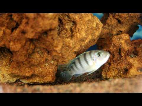 Самые красивые рыбки для аквариума-описание видов