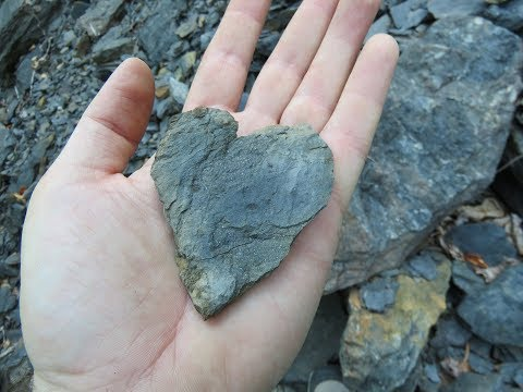 Fossil Hunting In Nesquehoning PA