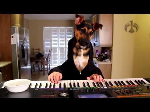 Dog Plays Waltz On Piano