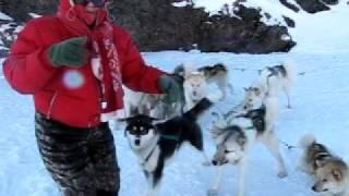 Greenland, Ilulissat Dog Slede Ride