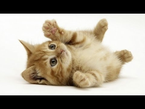 Wonderful World Of Cats - Domestic Cats Documentary - History Channel HD