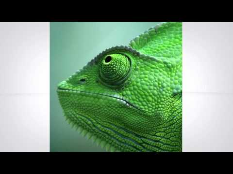 Logo Animation -- The Carnegie Museum of Natural History