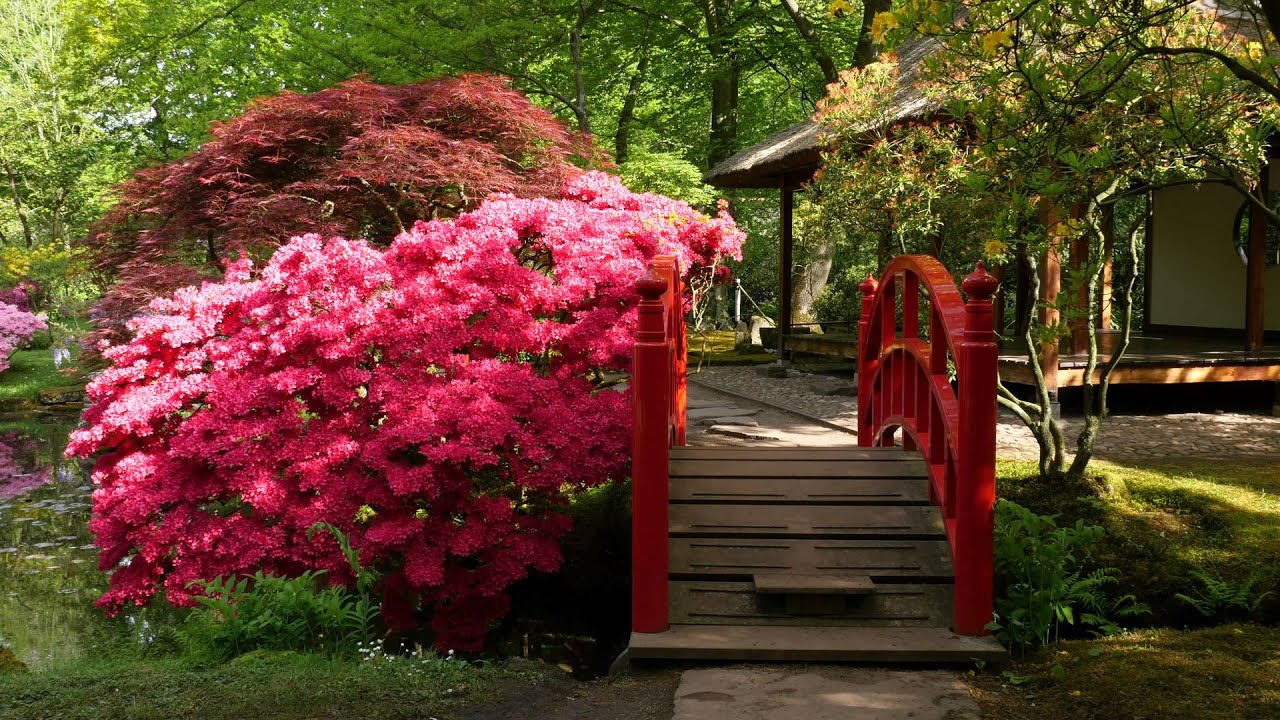Japanse tuin op landgoed Clingendael in 4K