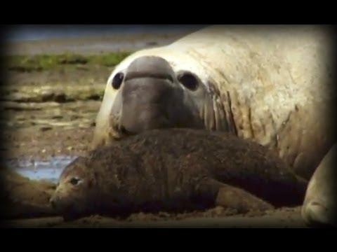 Patagonia: Refugio de los Monstruos (documental completo)