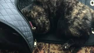 Moog and catnip