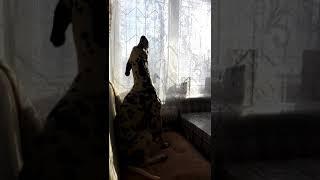 Поющая воющая собака, смешное, прикольное видео с животными