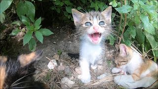 Kittens hissing at me beacuse they saw first time a human