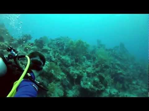 HD - Scuba Diving Grand Turk's Anchor Ledge