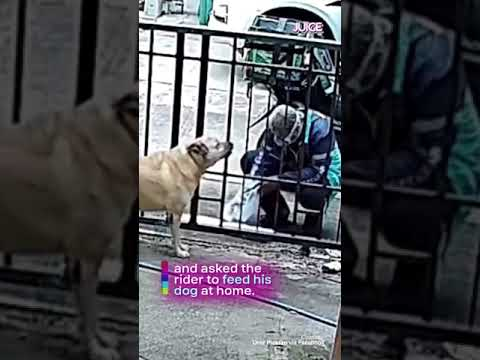 Food Delivery Rider Feeds Hungry Dog In Heartwarming Video