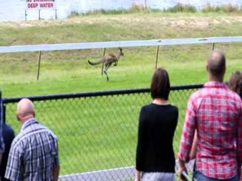 Kangaroos Force Hanging Rock Cancellation