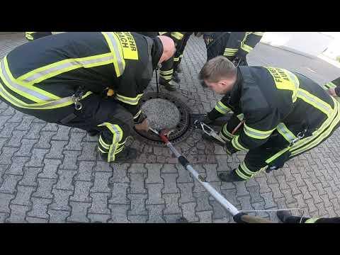 Rescatan a una rata obesa que quedó atrapada en una alcantarilla