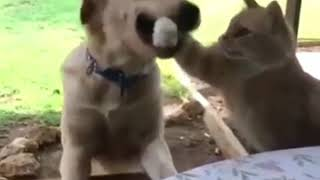Собака кусает кошку за лапу