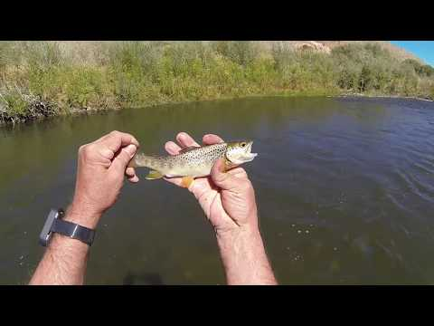 Trout Fishing On The East Walker River At Rosaschi Ranch In Nevada