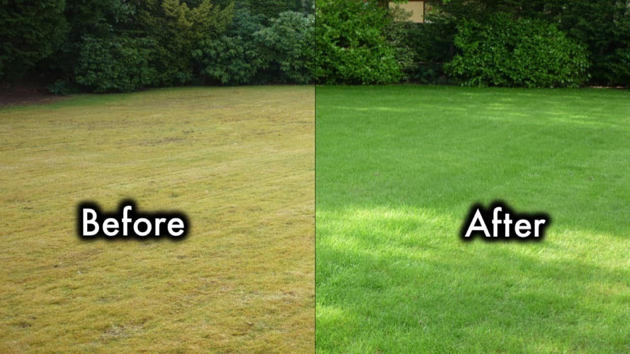 8 Secrets To Keep Your Lawn Always Green And Healthy - 8 Secrets To Keep Your Lawn Always Green And Healthy - YouTube