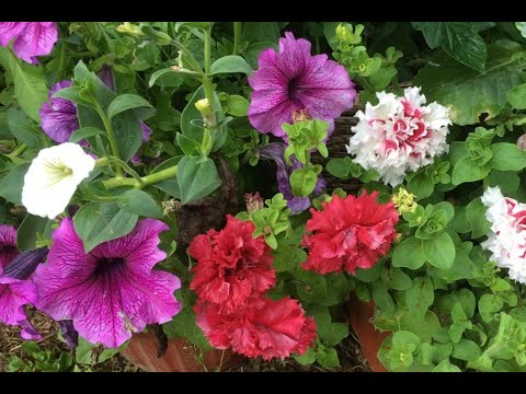 Какие растения цветут все лето