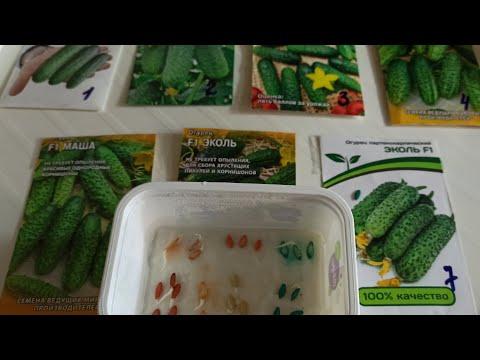 Выбираем сорта огурцов для СПб и ЛО. Посев семян на рассаду. 16+