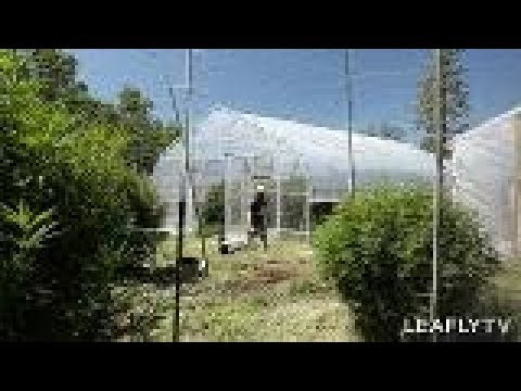 Growers Episode 5 - Phantom Farms