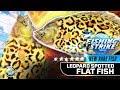 【釣魚大亨 Fishing Strike】NEW RARE Fish Leopard Spotted Flatfish flounder NORTHSEA