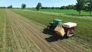 Garlic Harvest 2017