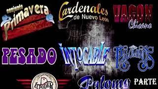 INTOCABLE,EL PODER DEL NORTE,VAGON CHICANO,PALOMINOS,CARDENALES DE NUEVO LEON Y CONJUNTO PRIMAVERA