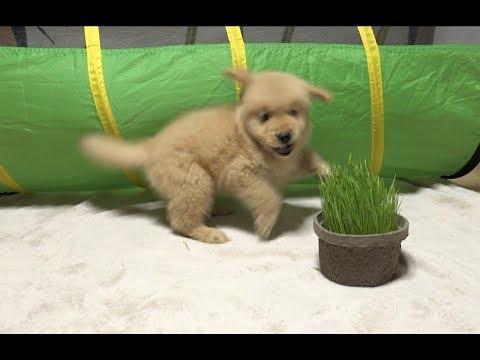 初めて見た草に怒る子犬